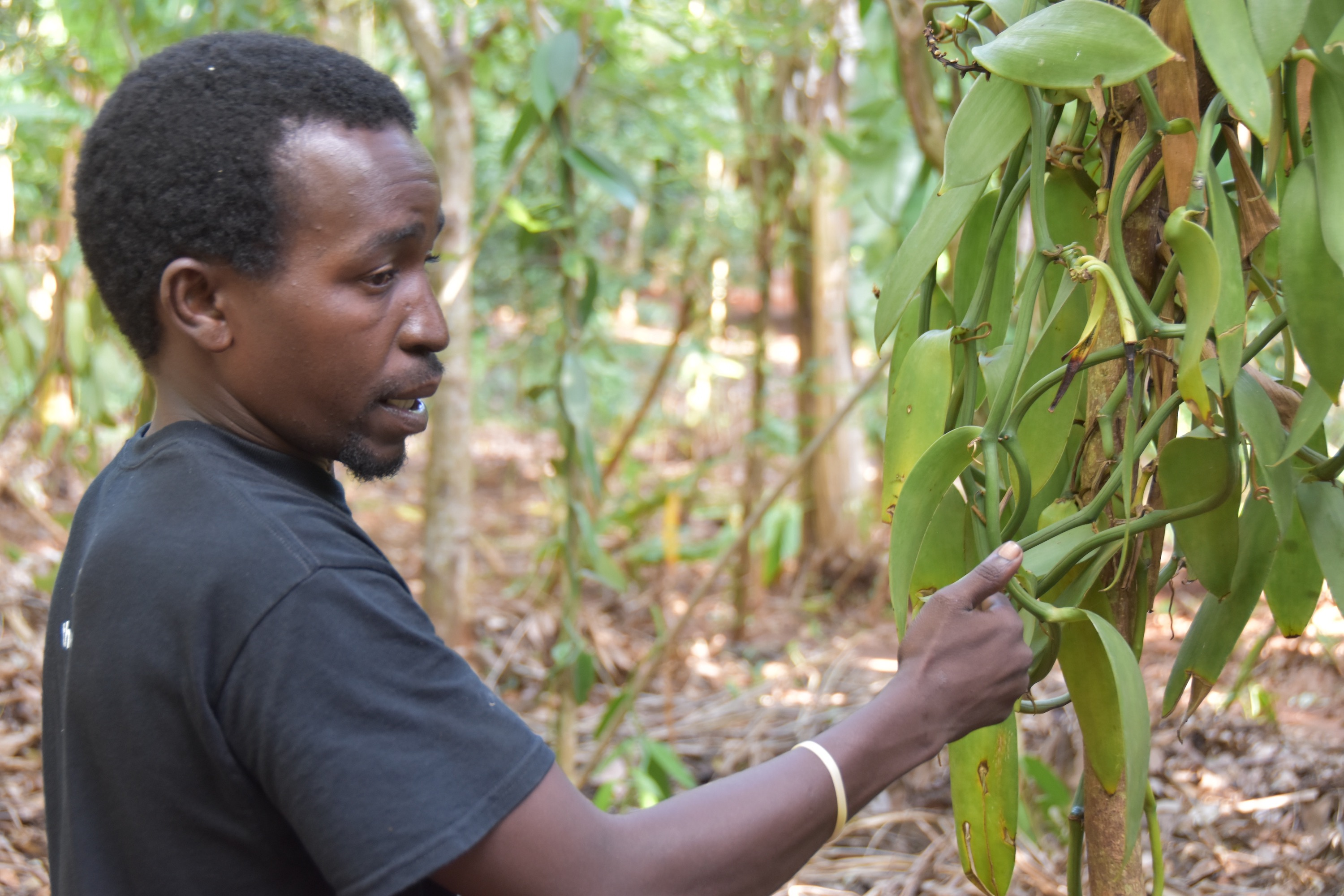 How DIY Biology can Improve Access to Digital Agricultural Technologies